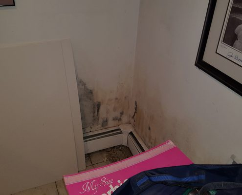 Mold Damage In Long Island NY
