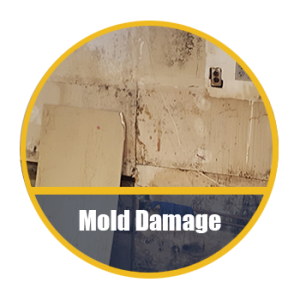 Mold Damage Restorations Long Island NY